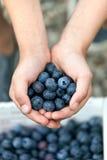 蓝莓极少数 库存图片