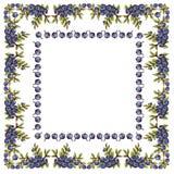 蓝莓框架餐巾  图库摄影