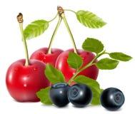 蓝莓樱桃叶子 皇族释放例证