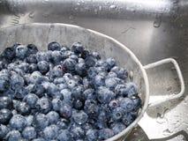 蓝莓水槽 库存照片