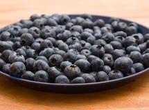 蓝莓牌照  库存照片