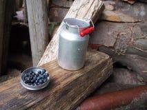 蓝莓牛痘myrtillus 免版税库存图片