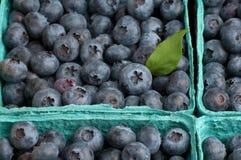 蓝莓特写镜头农夫市场s 免版税库存照片