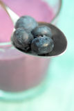 蓝莓特写镜头 库存图片