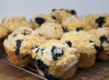 蓝莓玉米粉小蛋糕 库存图片