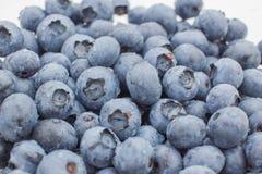 蓝莓的新关闭 库存图片