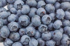 蓝莓的新关闭 免版税库存图片