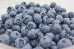 蓝莓的新关闭 免版税库存照片