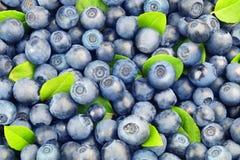 从蓝莓的背景 免版税库存照片