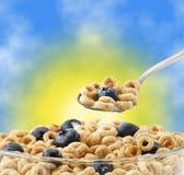 蓝莓碗谷物燕麦匙子 库存图片