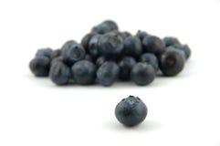 蓝莓突出 免版税库存照片
