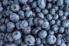 蓝莓纹理背景 免版税库存图片