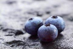 蓝莓结果实北的highbush 免版税库存照片