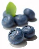 蓝莓编组查出的白色 库存照片