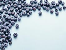 蓝莓背景拷贝空间 库存图片