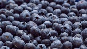 蓝莓背景横幅 图库摄影