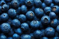 蓝莓背景特写镜头 免版税库存图片