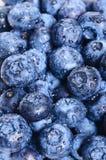 蓝莓背景 免版税库存图片