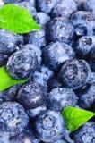 蓝莓背景 库存图片