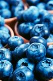 蓝莓背景 免版税库存照片