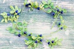 蓝莓花圈天花板彩色照片与绿色叶子的 新鲜的成熟水多的越桔,明亮的秋天五颜六色的backgrou 库存图片
