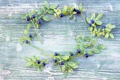 蓝莓花圈天花板彩色照片与绿色叶子的 新鲜的成熟水多的越桔,明亮的秋天五颜六色的backgrou 免版税库存照片