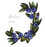 蓝莓花圈水彩,植物的例证 库存例证