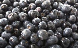 蓝莓蓝色果子背景 免版税库存图片