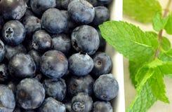 蓝莓薄菏 库存图片