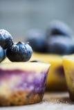 蓝莓顶部 免版税图库摄影