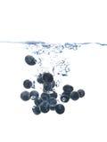 蓝莓飞溅 库存照片