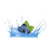 蓝莓飞溅 免版税库存图片