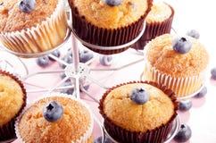 蓝莓香草杯子蛋糕 库存图片
