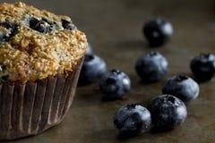 蓝莓麸面松饼用蓝莓 免版税库存照片