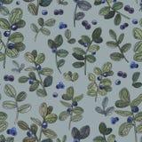 蓝莓 水彩植物的例证 自然无缝的模式 土气样式 皇族释放例证