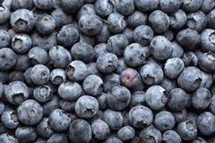 蓝莓 免版税图库摄影
