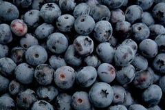 蓝莓 图库摄影