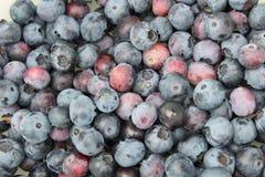蓝莓goodnes 免版税库存照片