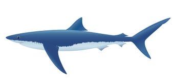 蓝鲨鱼 库存图片