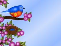 蓝鸫和巢背景 图库摄影