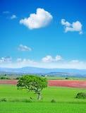 蓝绿色下天空结构树 免版税库存照片