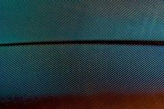 蓝绿色和伯根地羽毛样式宏指令背景的 库存照片