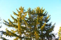 蓝绿色干燥叶子天空门自然墙纸 免版税库存照片