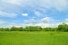 蓝绿色草甸天空 库存图片
