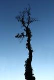 蓬乱的树在微明下 免版税库存照片