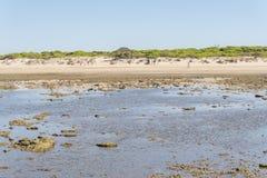 蓬塔公正海滩,花名册,卡迪士,西班牙 鱼梁,鱼梁, 免版税库存图片