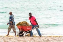 蓬塔CANA,多米尼加共和国- 2017年5月22日:有推车的一个人在海滩整理 复制文本的空间 库存图片