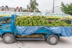 蓬塔CANA,多米尼加共和国- 2015年6月18日:卡车大蕉果子有很多 免版税图库摄影