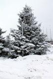 蓬松吃了在雪下 背景 植物iderable 免版税库存图片