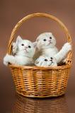 蓬松小猫一点 库存图片